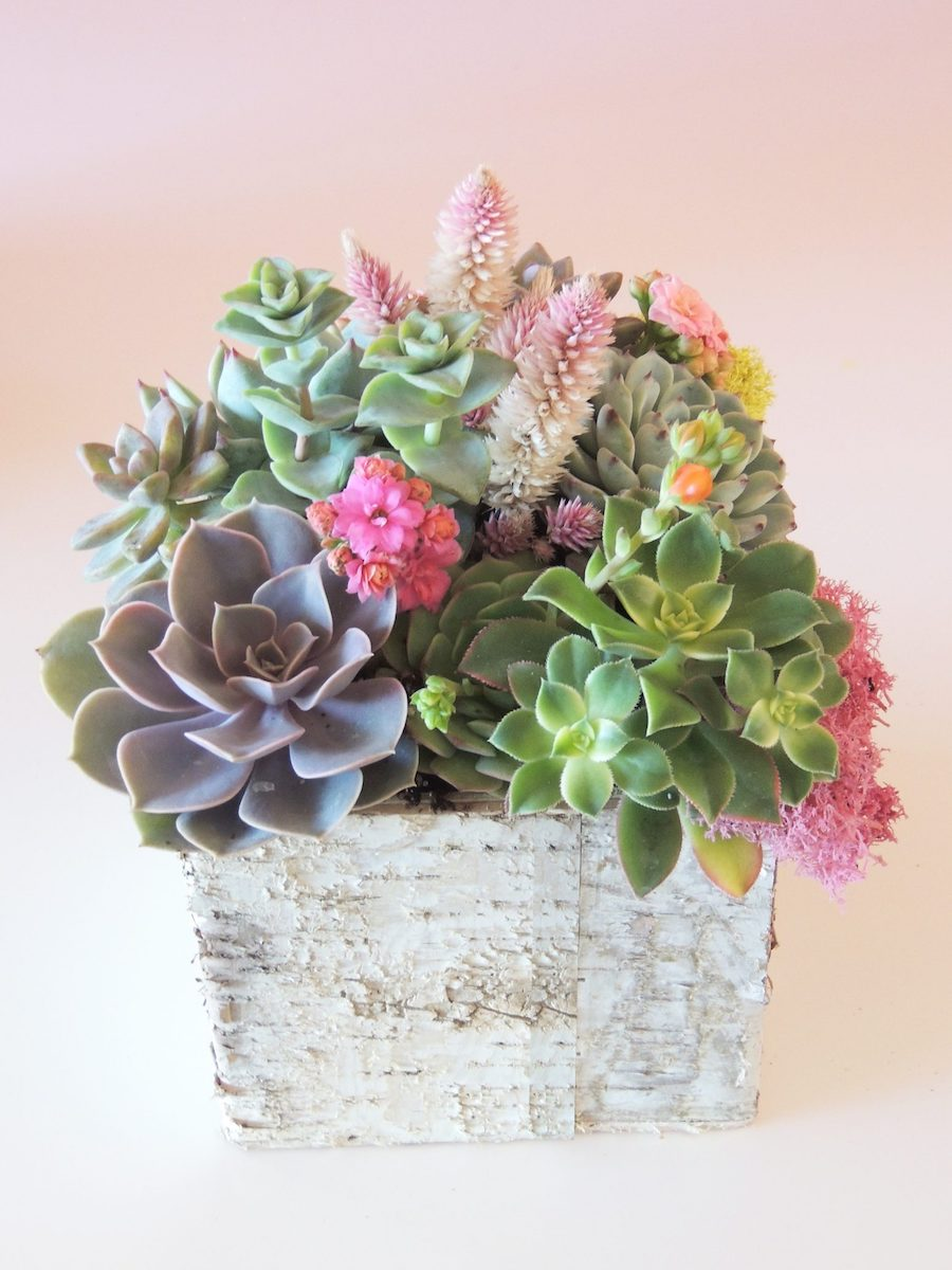 Valentine's Day, Succulently Urban, Zaitography, Kimberly Photography, Thompson Photography Group, Focused on Forever Photography, Panache Style, Valentine's Day, Valentines day Flowers, V-day Flowers, Valentines day gift ideas